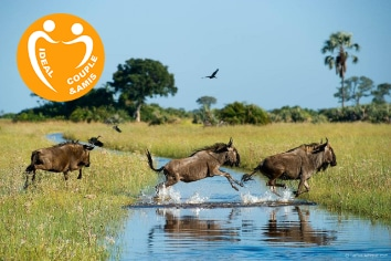 BOTSWANA : SABLE SAFARI